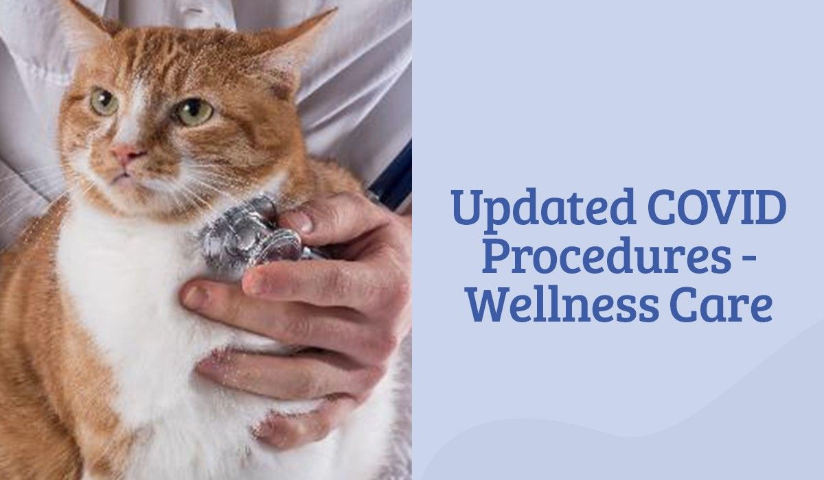 Updated COVID Procedures - Wellness Care