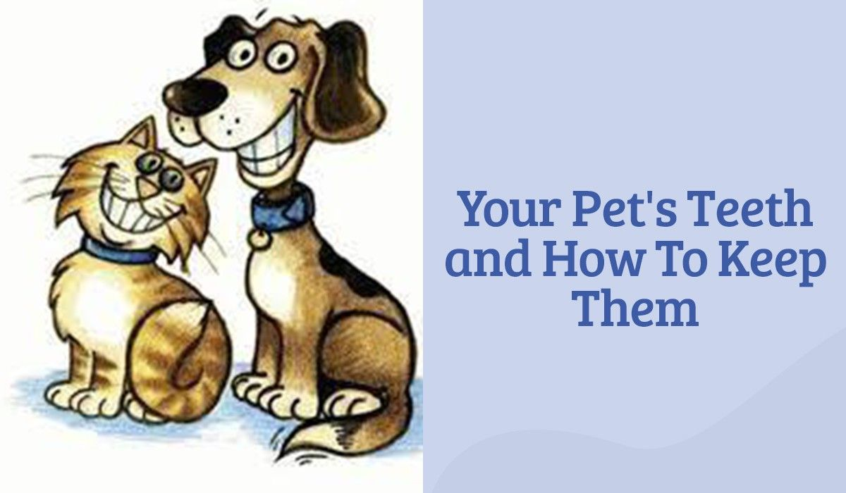 Your Pet's Teeth and How To Keep Them
